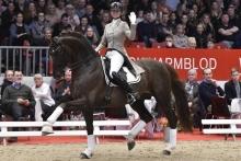 Danish Stallion of the Year 2019: Skovens Rafael