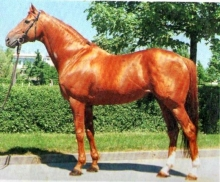 Remember The Thoroughbred Option - Thirteen