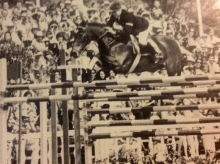 Stroller: Thoroughbred sire out of a Connemara dam