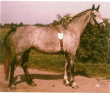 Vase The Mare Matters in Sporthorse Breeding